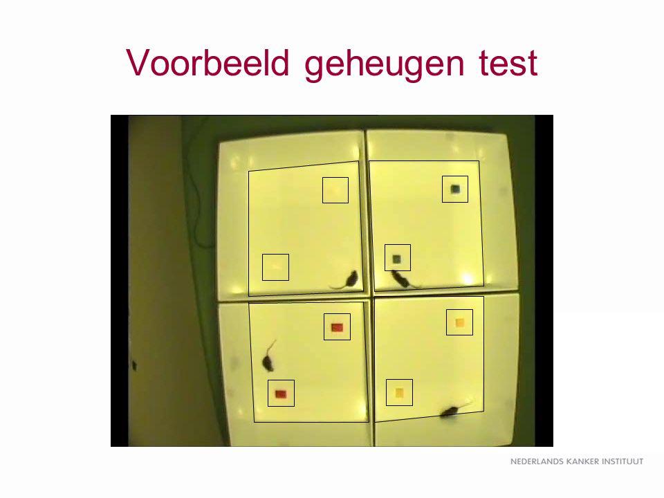 Voorbeeld geheugen test