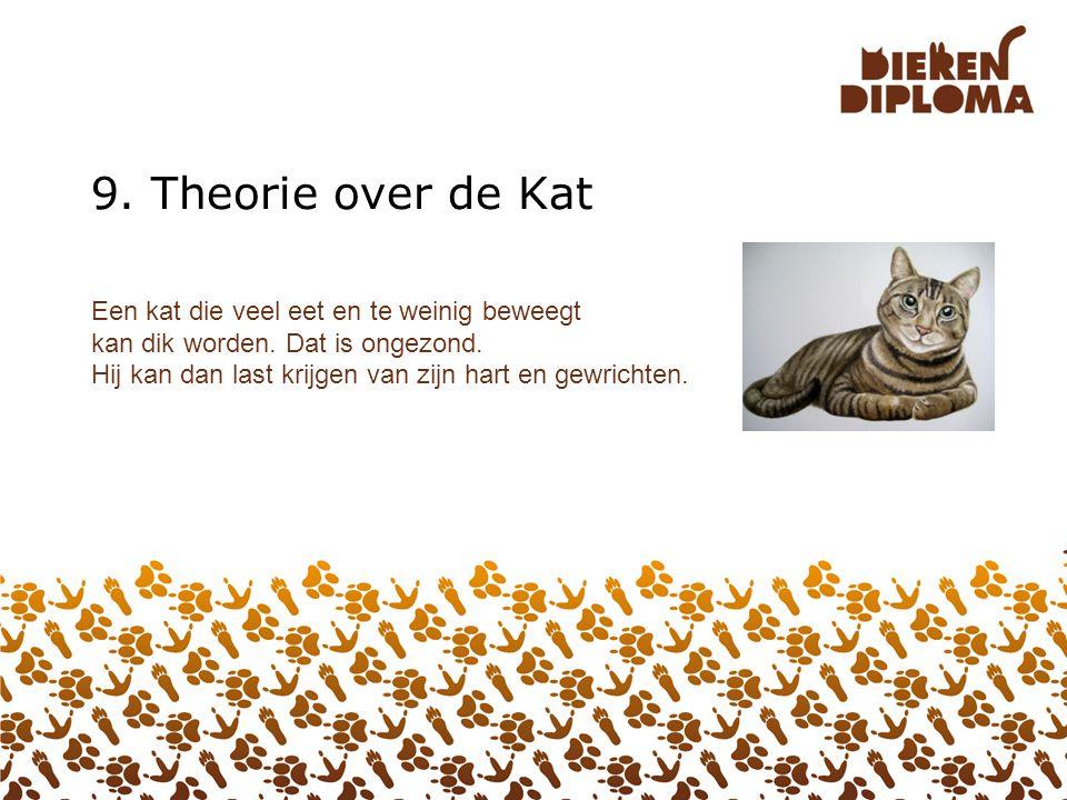 9. Theorie over de Kat