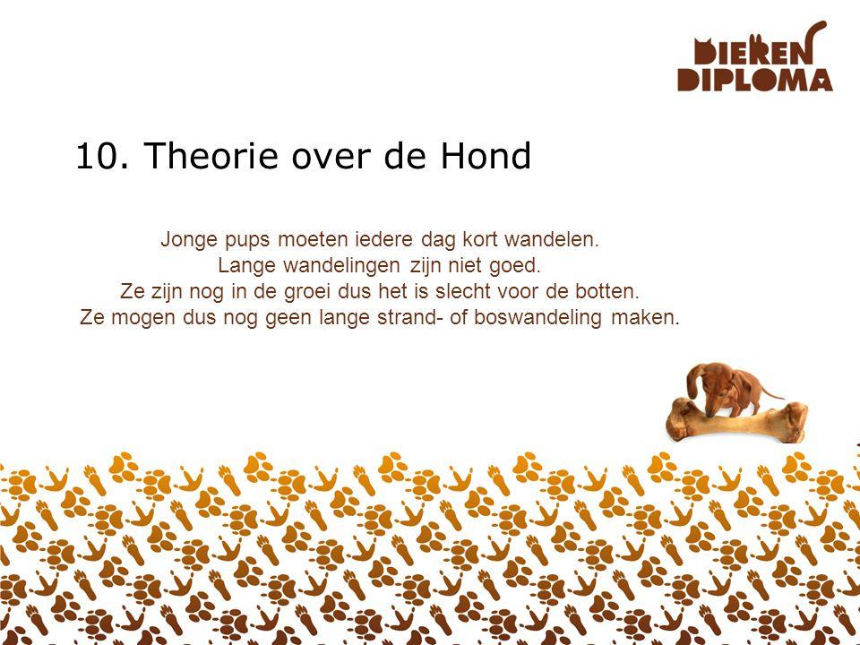 10. Theorie over de Hond Jonge pups moeten iedere dag kort wandelen.