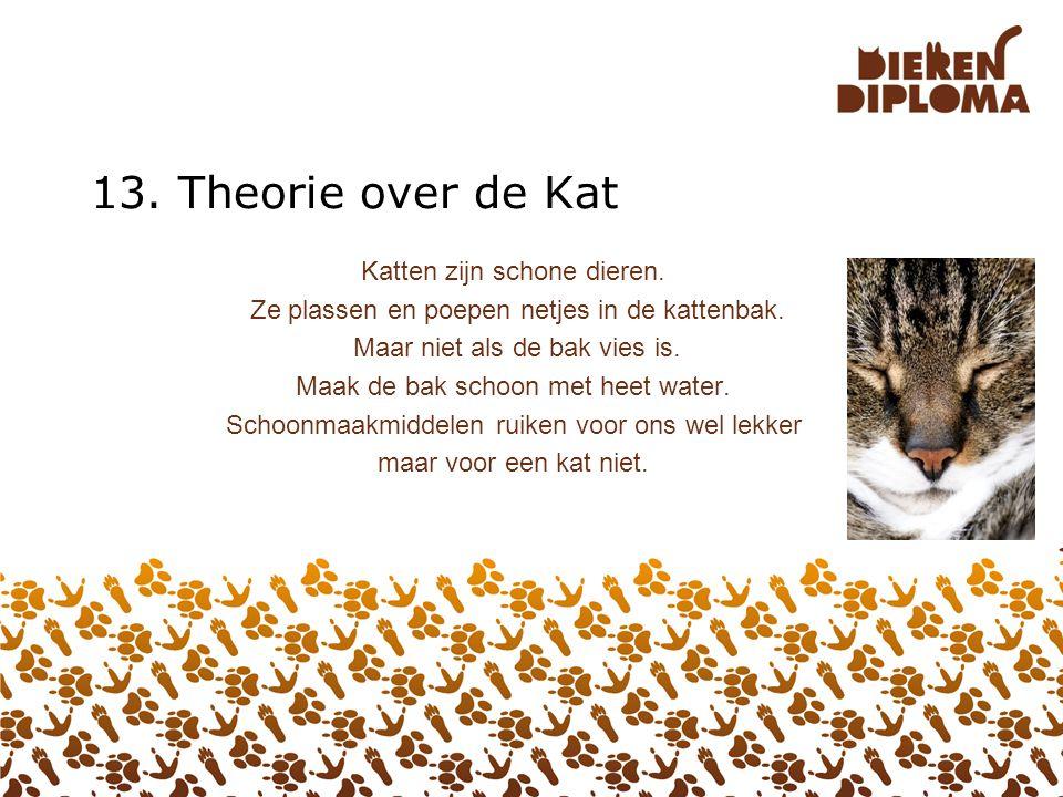 13. Theorie over de Kat Katten zijn schone dieren.
