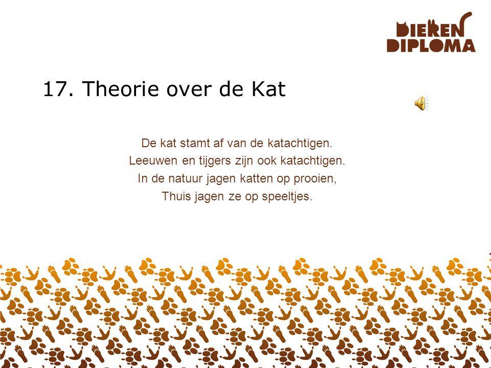 17. Theorie over de Kat De kat stamt af van de katachtigen.