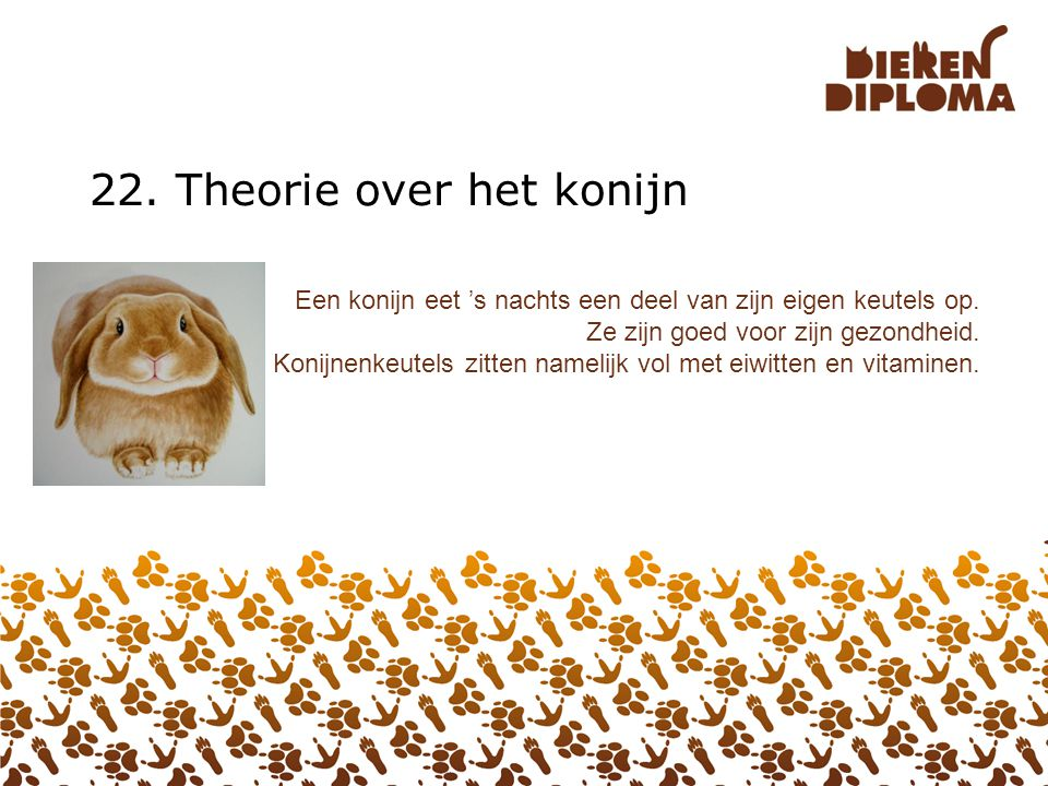 22. Theorie over het konijn