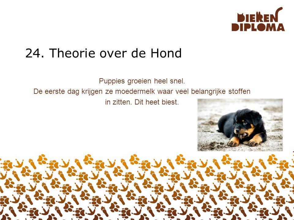 24. Theorie over de Hond Puppies groeien heel snel.