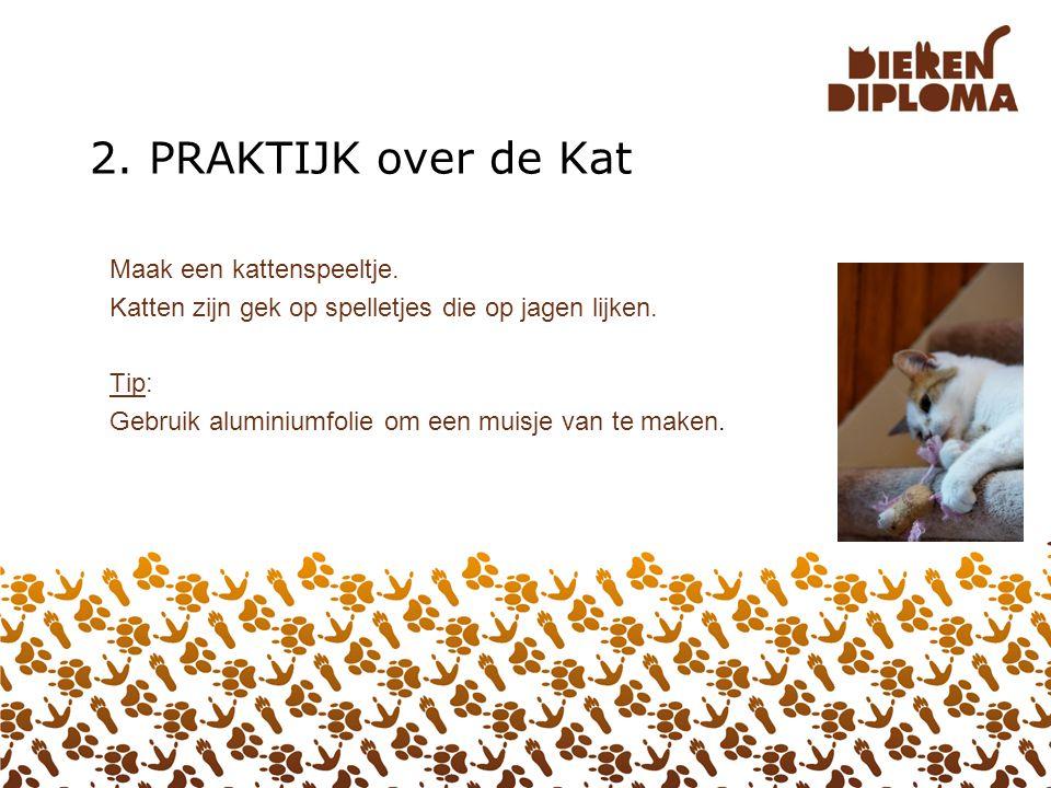 2. PRAKTIJK over de Kat Maak een kattenspeeltje.