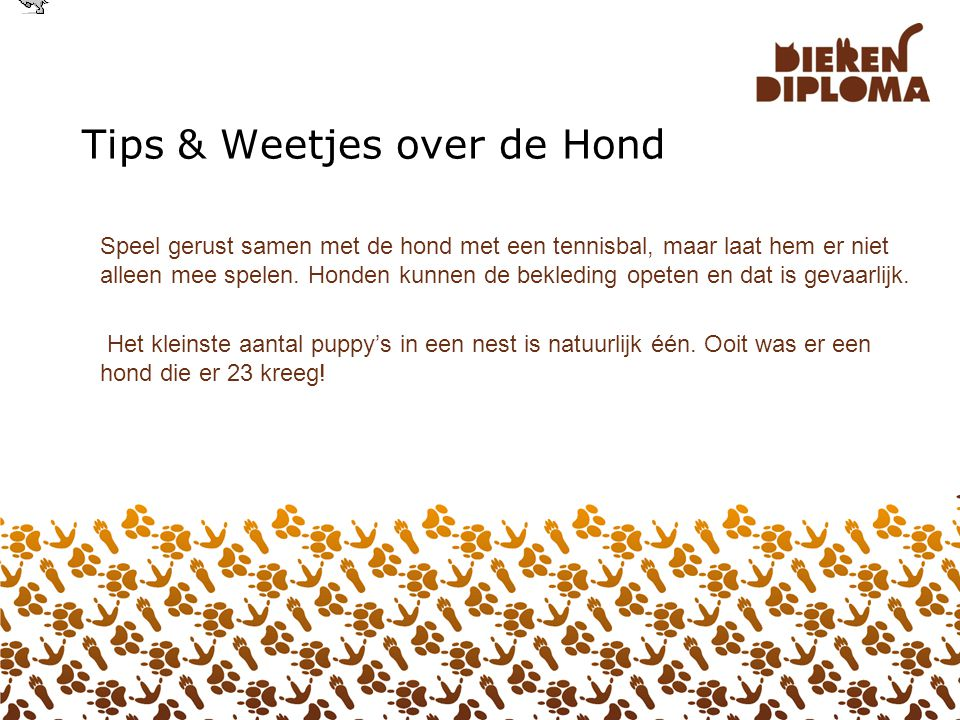 Tips & Weetjes over de Hond