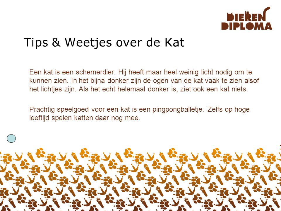 Tips & Weetjes over de Kat