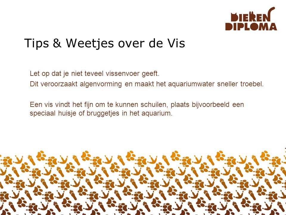 Tips & Weetjes over de Vis