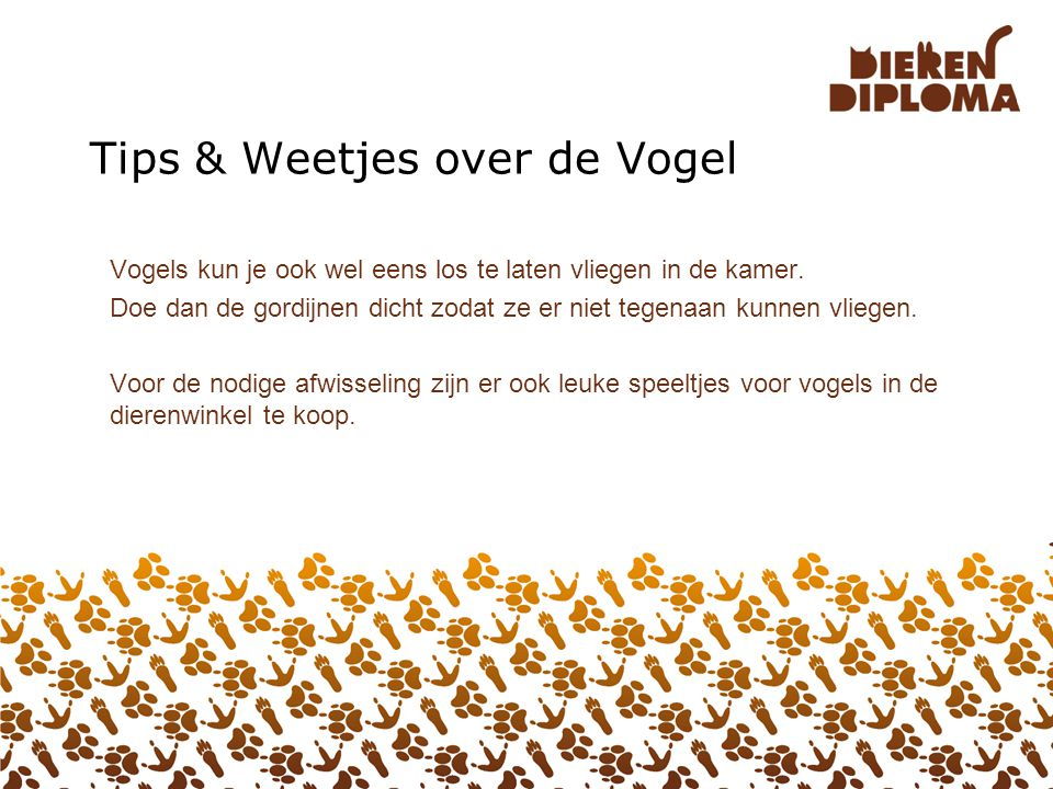 Tips & Weetjes over de Vogel