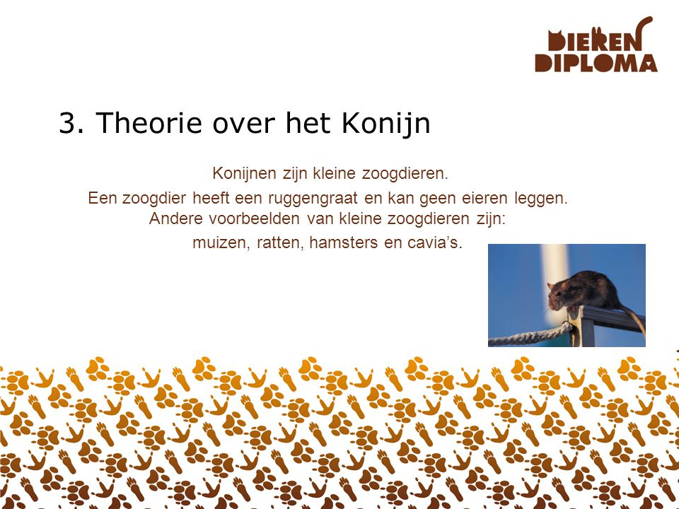 3. Theorie over het Konijn