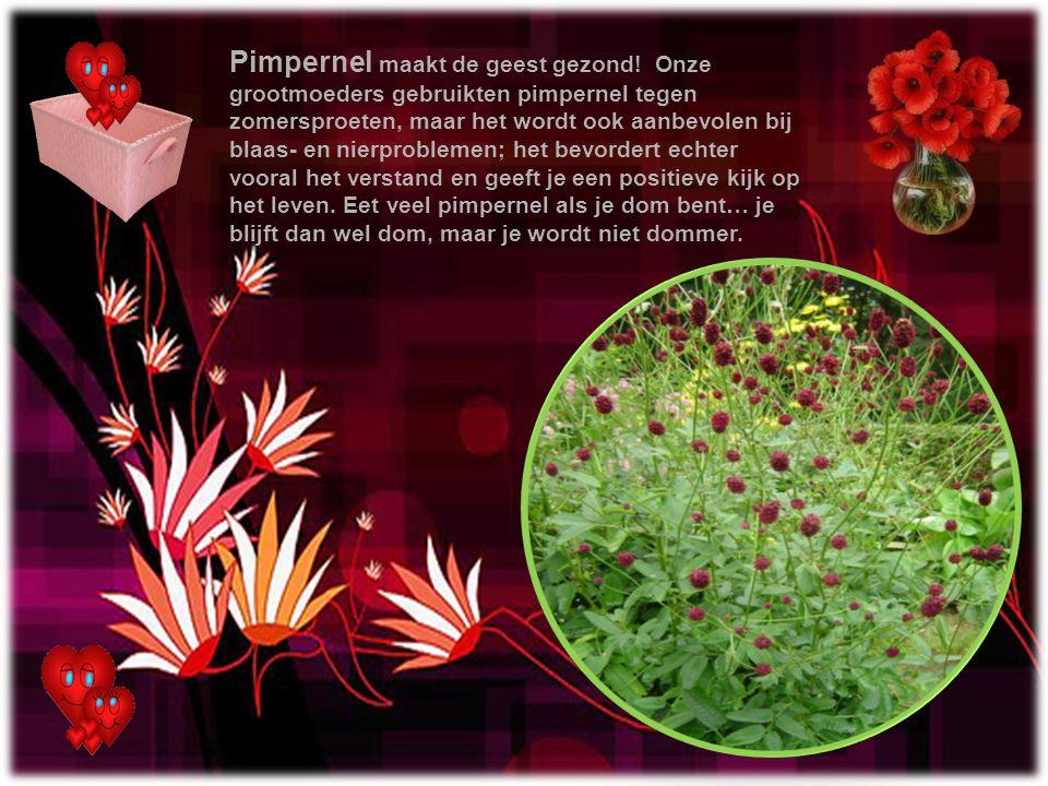 Pimpernel maakt de geest gezond
