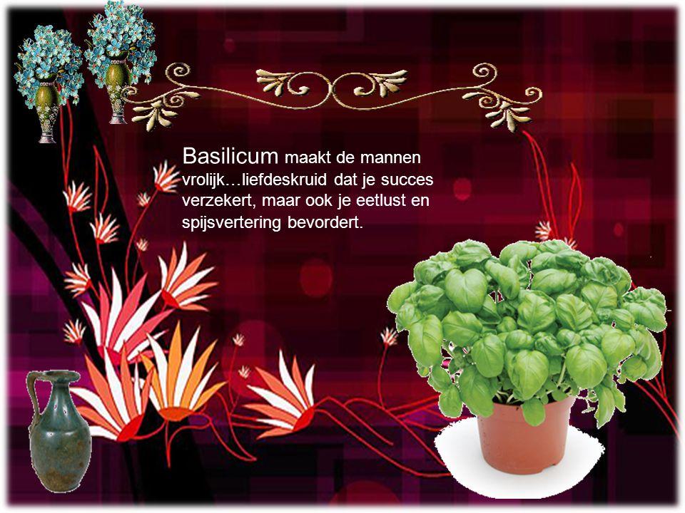 Basilicum maakt de mannen vrolijk…liefdeskruid dat je succes verzekert, maar ook je eetlust en spijsvertering bevordert.