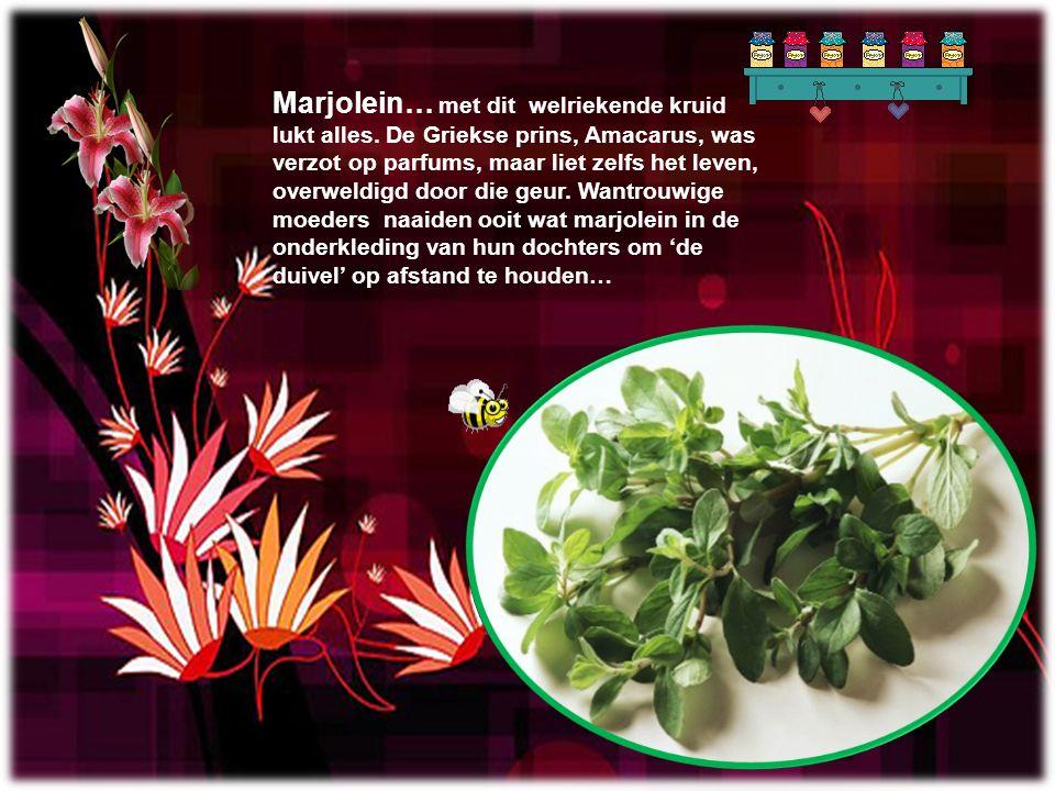 Marjolein… met dit welriekende kruid lukt alles