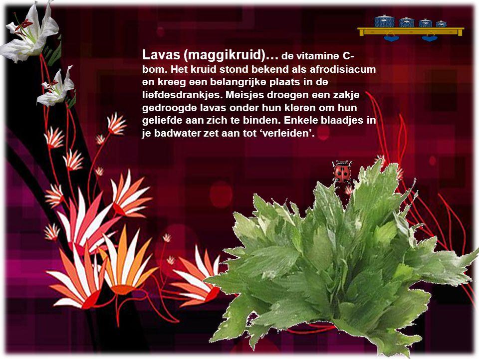 Lavas (maggikruid)… de vitamine C-bom