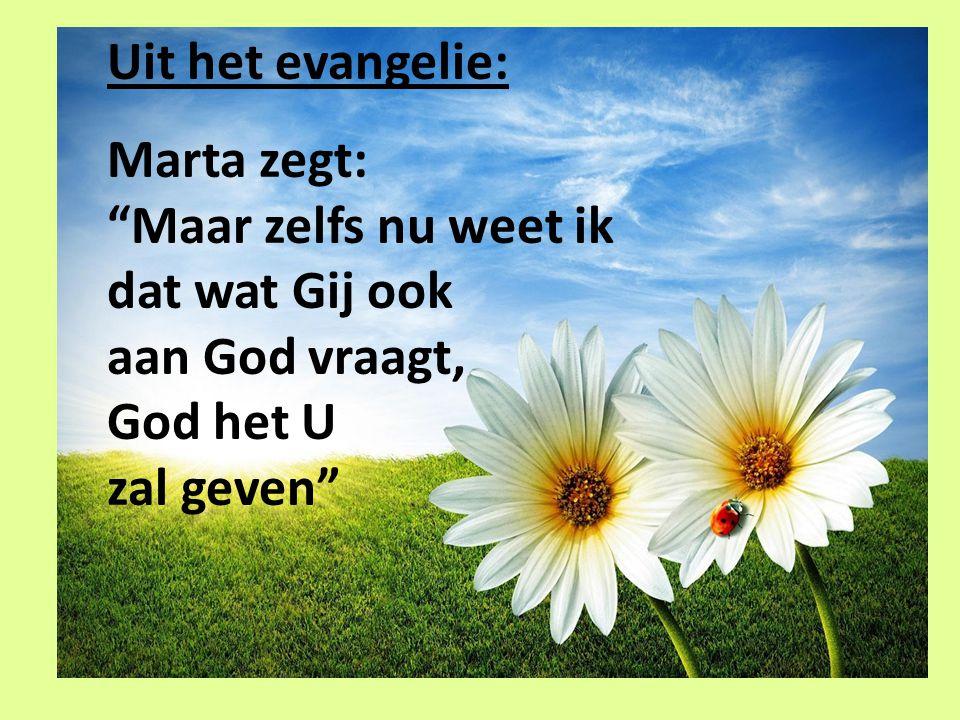 Uit het evangelie: Marta zegt: Maar zelfs nu weet ik dat wat Gij ook aan God vraagt, God het U zal geven
