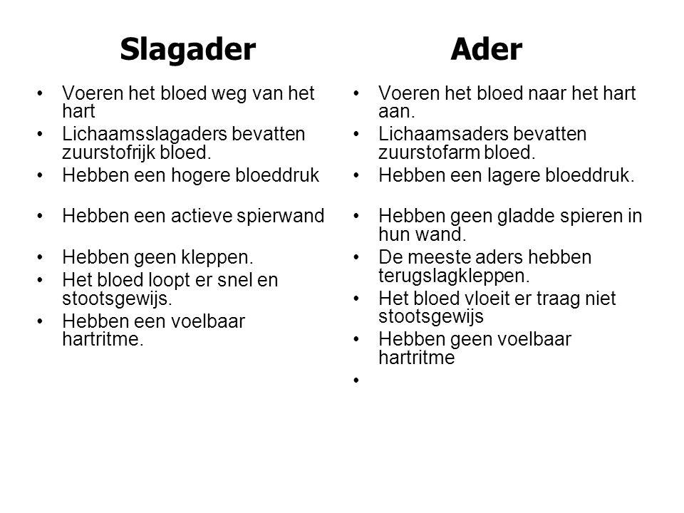 Slagader Ader Voeren het bloed weg van het hart