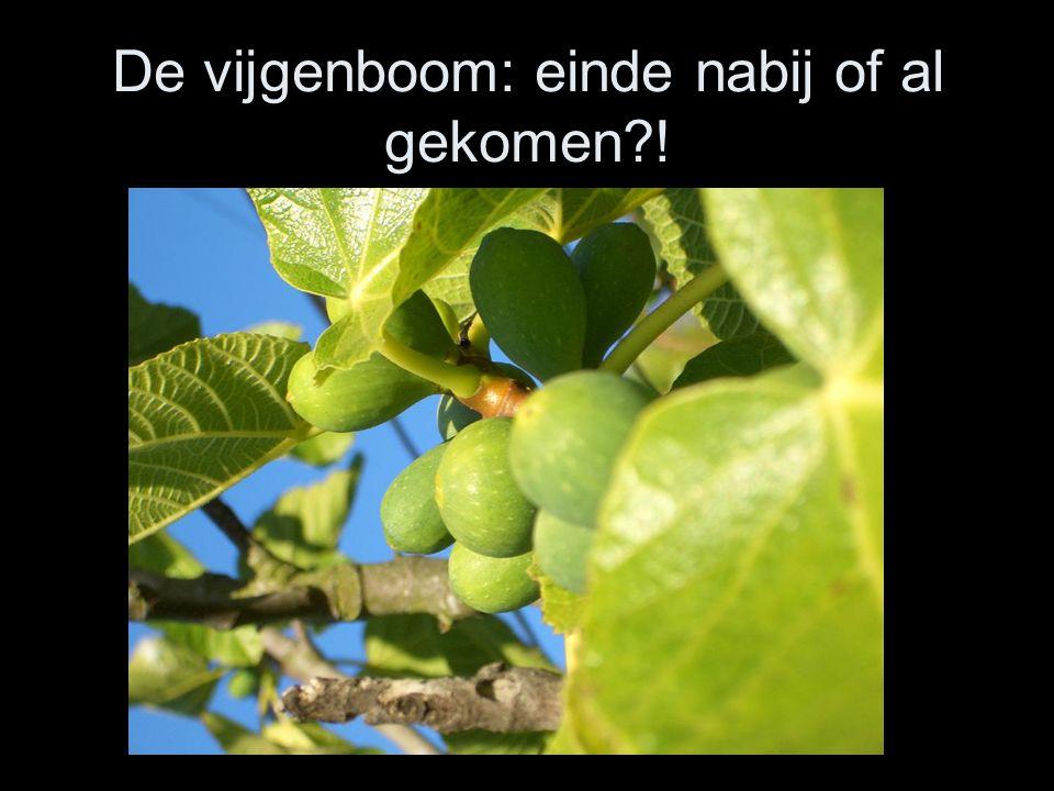 De vijgenboom: einde nabij of al gekomen !