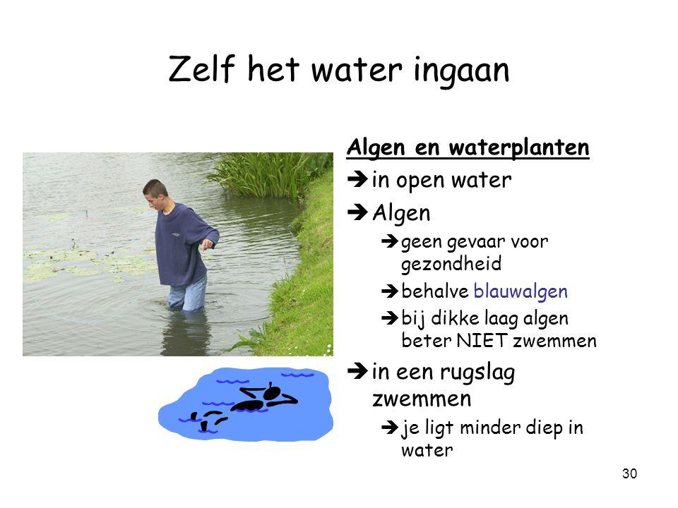 Zelf het water ingaan Algen en waterplanten in open water Algen