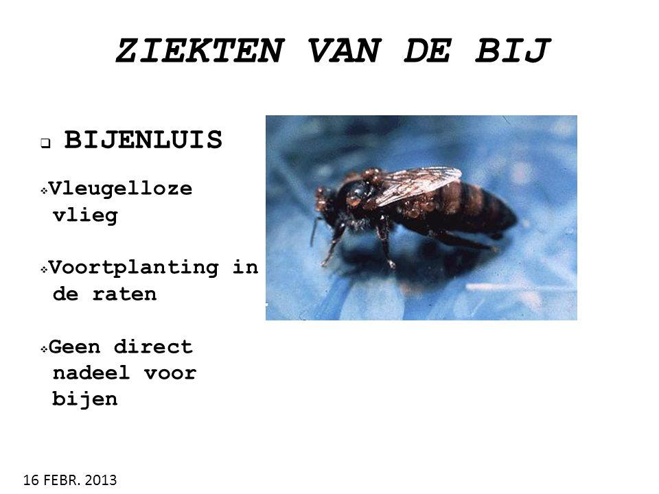 ZIEKTEN VAN DE BIJ BIJENLUIS Vleugelloze vlieg Voortplanting in