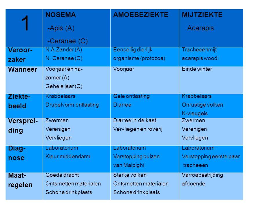 1 NOSEMA -Apis (A) -Ceranae (C) AMOEBEZIEKTE MIJTZIEKTE Acarapis
