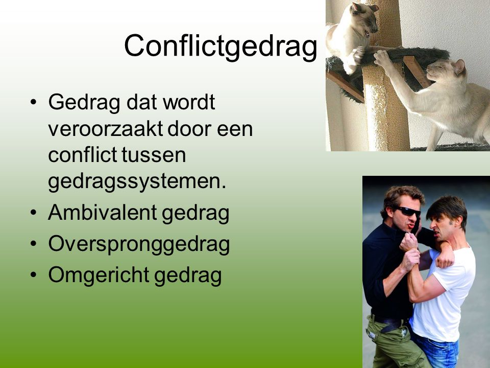 Conflictgedrag Gedrag dat wordt veroorzaakt door een conflict tussen gedragssystemen. Ambivalent gedrag.