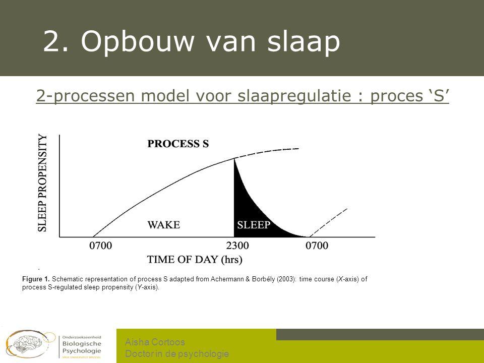 2. Opbouw van slaap 2-processen model voor slaapregulatie : proces 'S'