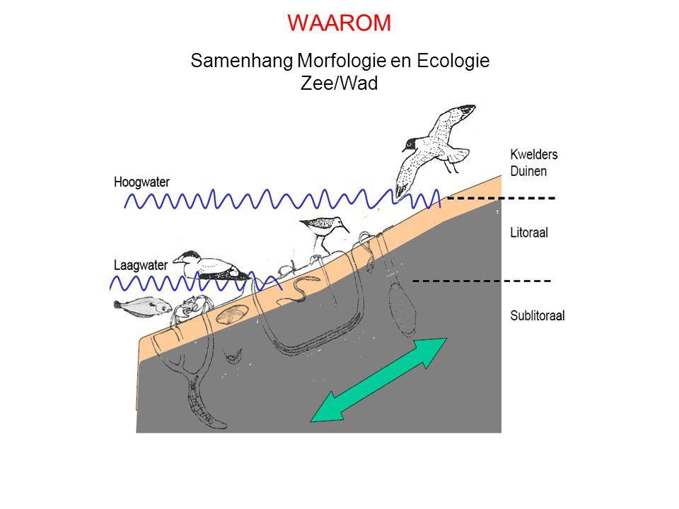 Samenhang Morfologie en Ecologie