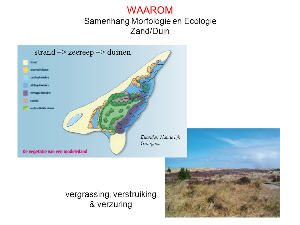 WAAROM Samenhang Morfologie en Ecologie Zand/Duin