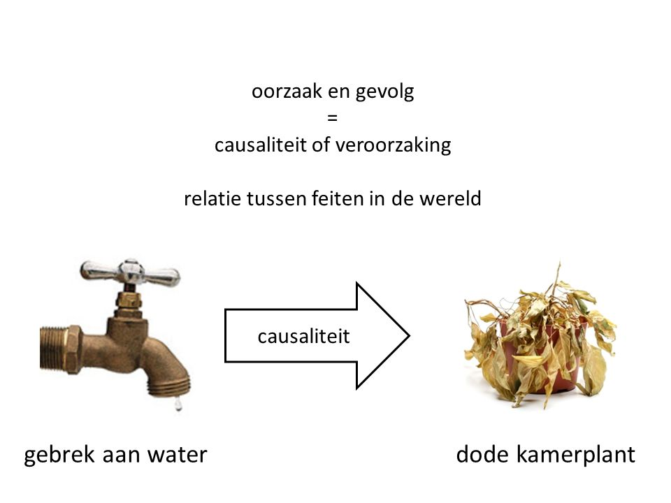 gebrek aan water dode kamerplant