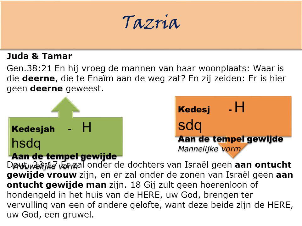 Tazria Juda & Tamar.