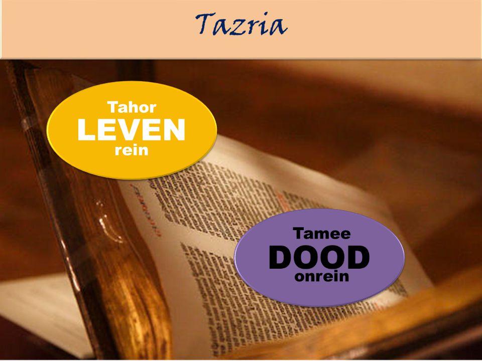 Tazria LEVEN Tahor rein DOOD Tamee onrein