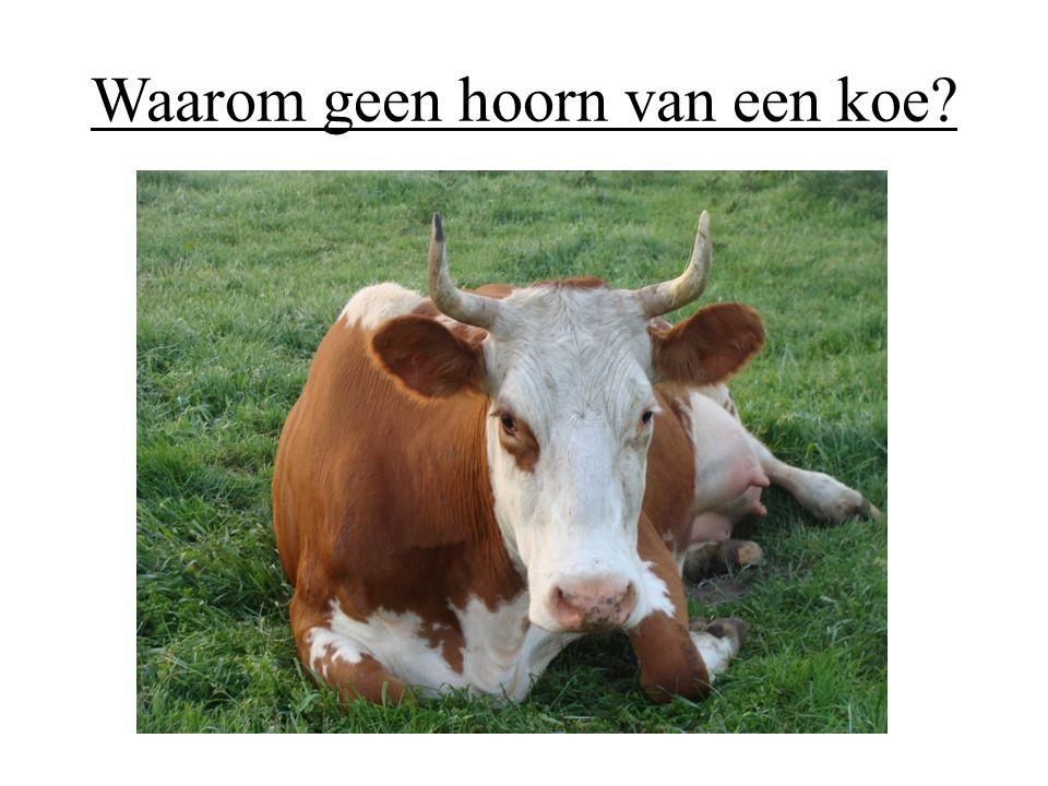 Waarom geen hoorn van een koe