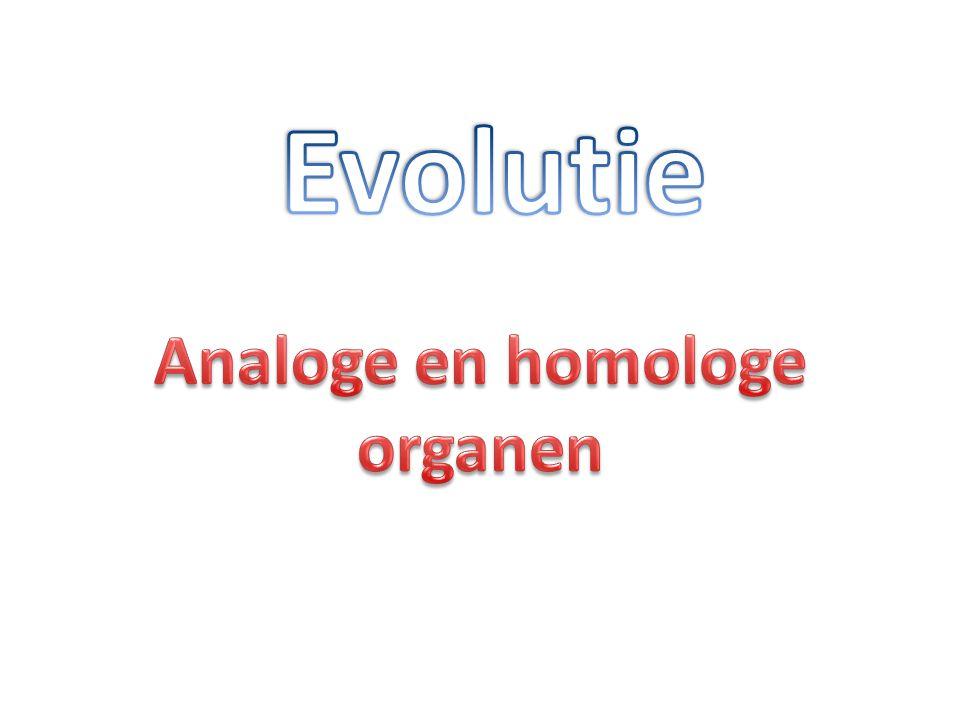 Evolutie Analoge en homologe organen