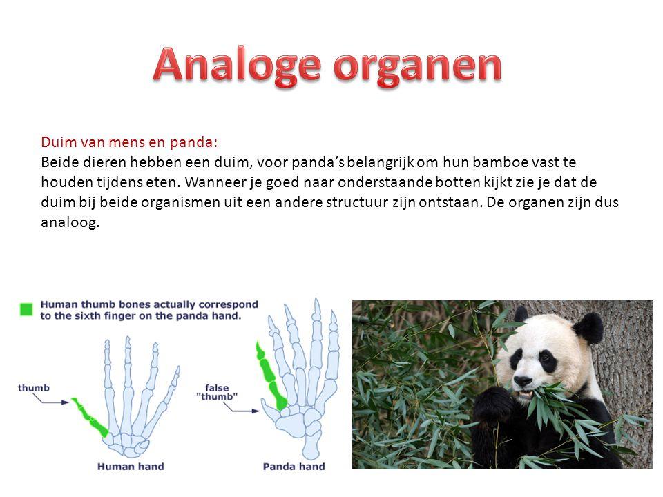 Analoge organen Duim van mens en panda:
