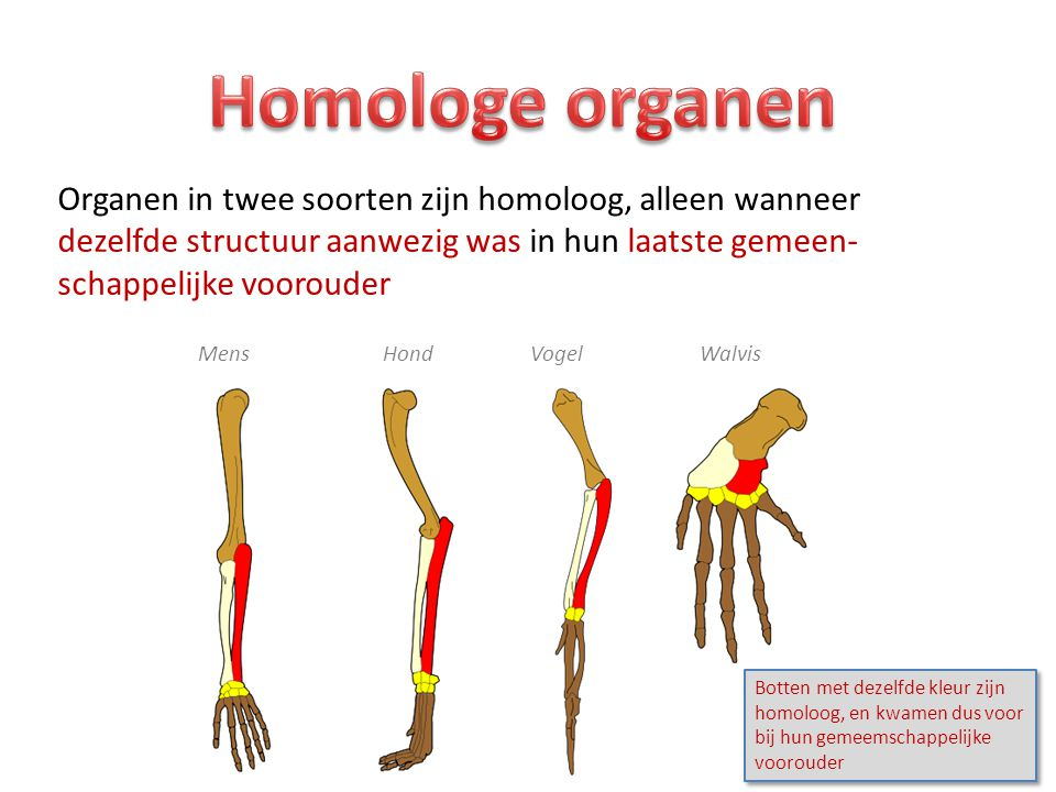 Homologe organen Organen in twee soorten zijn homoloog, alleen wanneer dezelfde structuur aanwezig was in hun laatste gemeen-schappelijke voorouder.