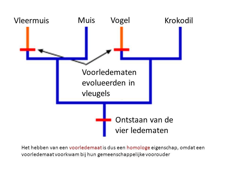 Vleermuis Muis Vogel Krokodil Voorledematen evolueerden in vleugels