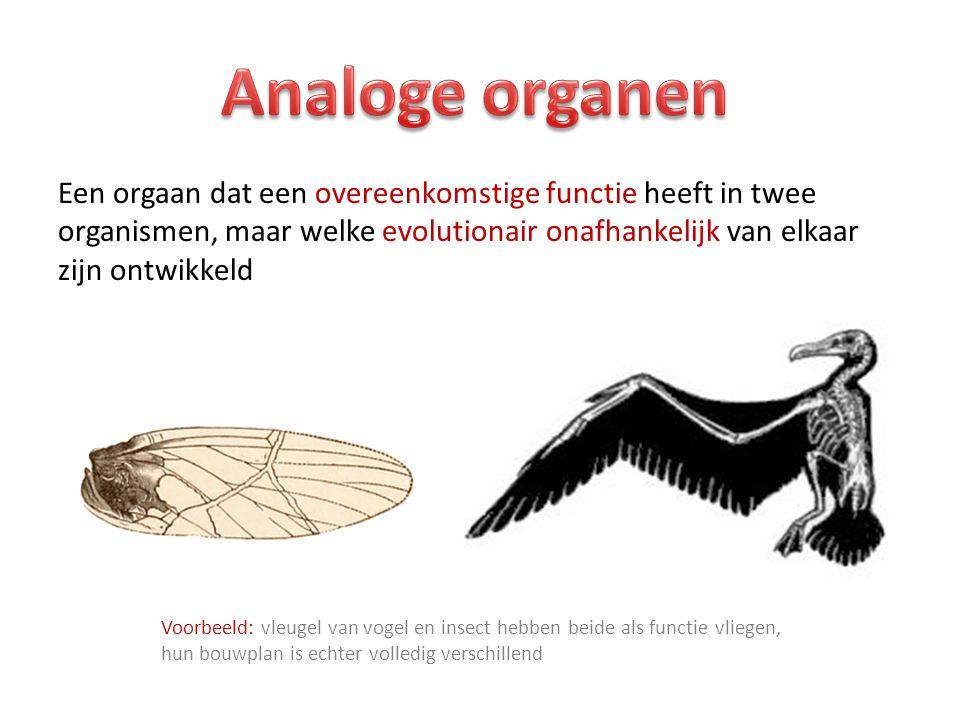 Analoge organen Een orgaan dat een overeenkomstige functie heeft in twee organismen, maar welke evolutionair onafhankelijk van elkaar zijn ontwikkeld.