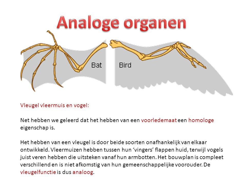 Analoge organen Vleugel vleermuis en vogel:
