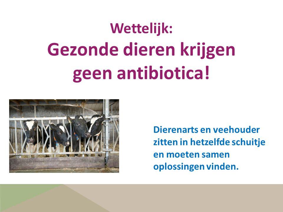 Gezonde dieren krijgen geen antibiotica!