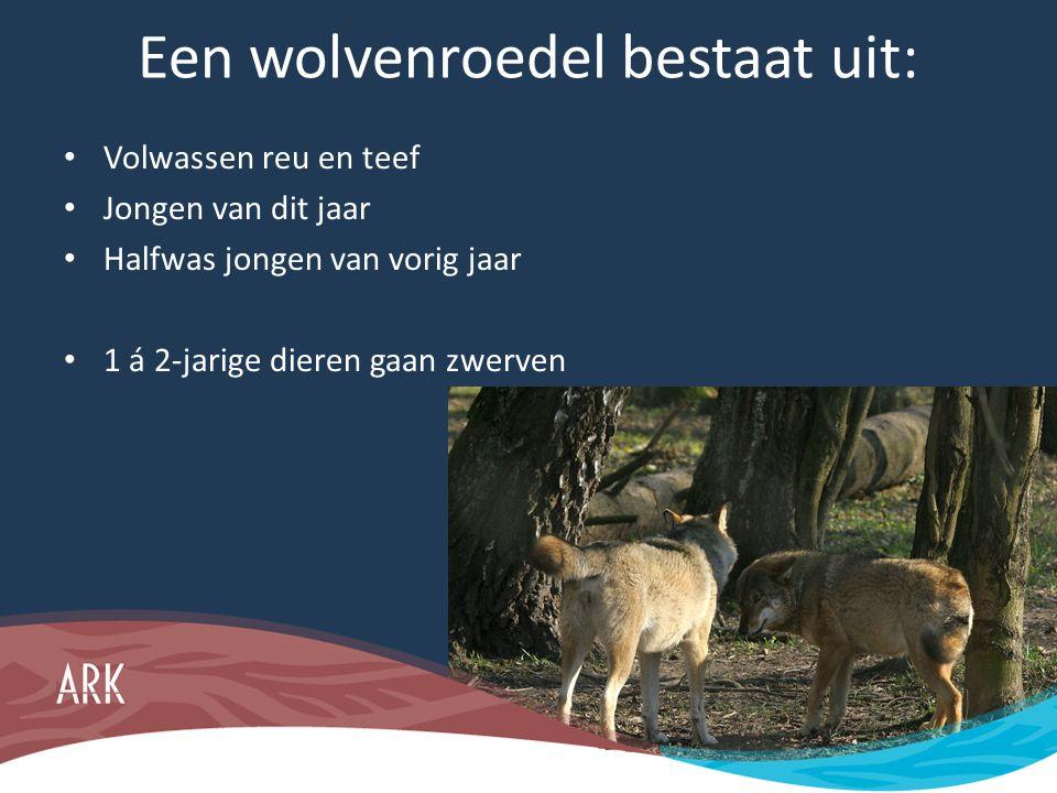 Een wolvenroedel bestaat uit: