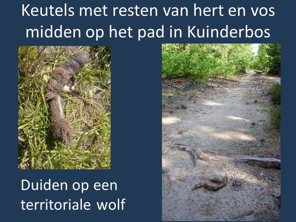 Keutels met resten van hert en vos midden op het pad in Kuinderbos
