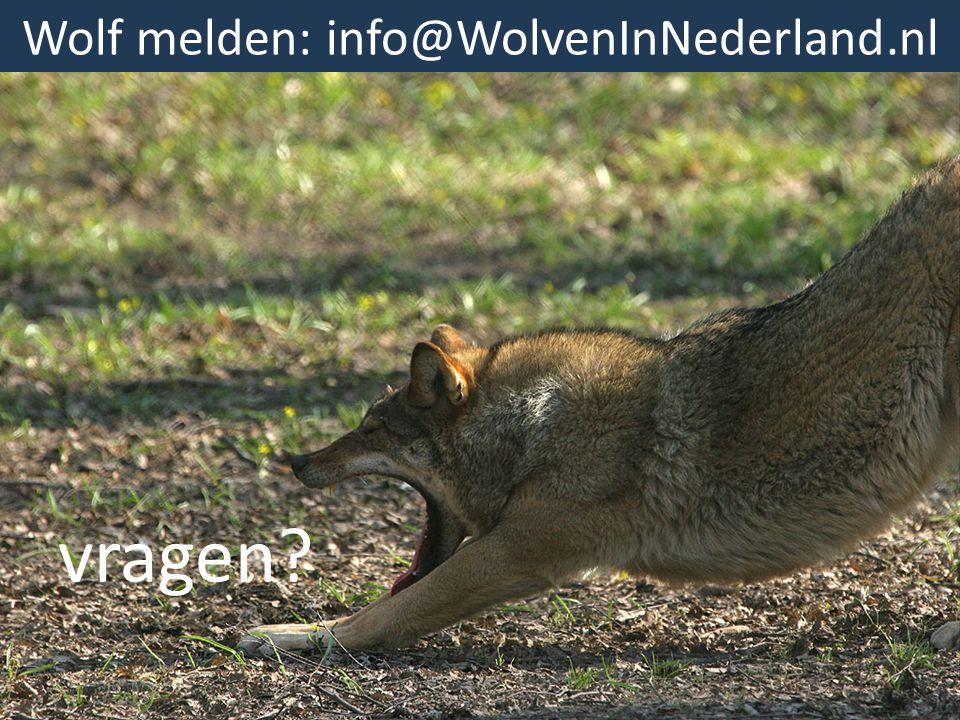 Wolf melden: info@WolvenInNederland.nl
