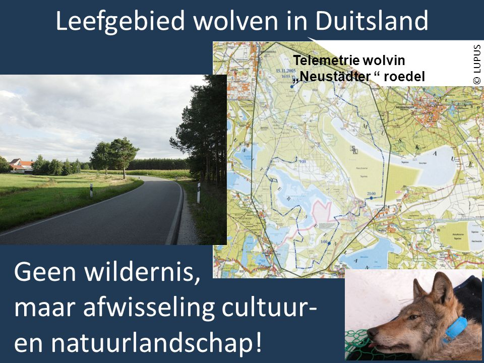 Leefgebied wolven in Duitsland