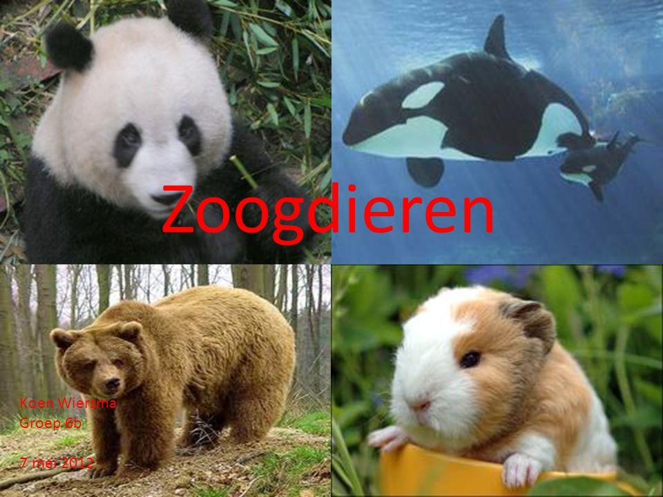 Zoogdieren Koen Wiersma Groep 6b 7 mei 2012