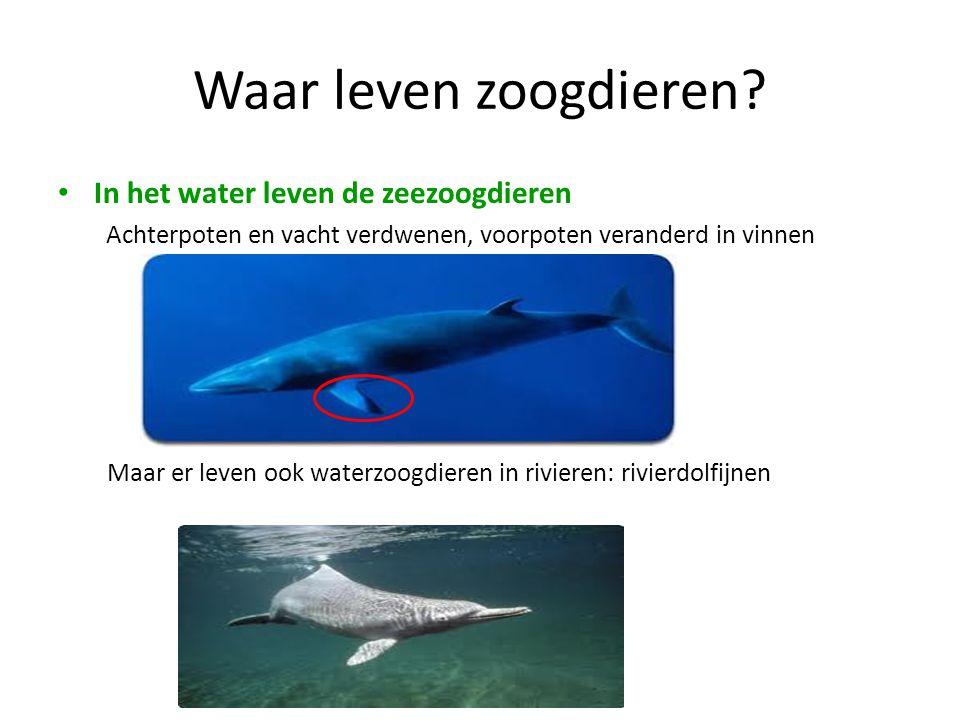 Waar leven zoogdieren In het water leven de zeezoogdieren