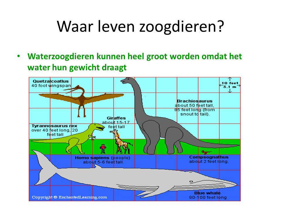 Waar leven zoogdieren Waterzoogdieren kunnen heel groot worden omdat het water hun gewicht draagt