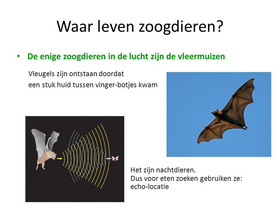 Waar leven zoogdieren De enige zoogdieren in de lucht zijn de vleermuizen. Vleugels zijn ontstaan doordat.