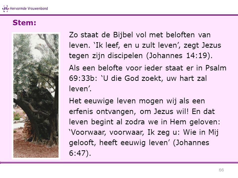 Stem: Zo staat de Bijbel vol met beloften van leven. 'Ik leef, en u zult leven', zegt Jezus tegen zijn discipelen (Johannes 14:19).