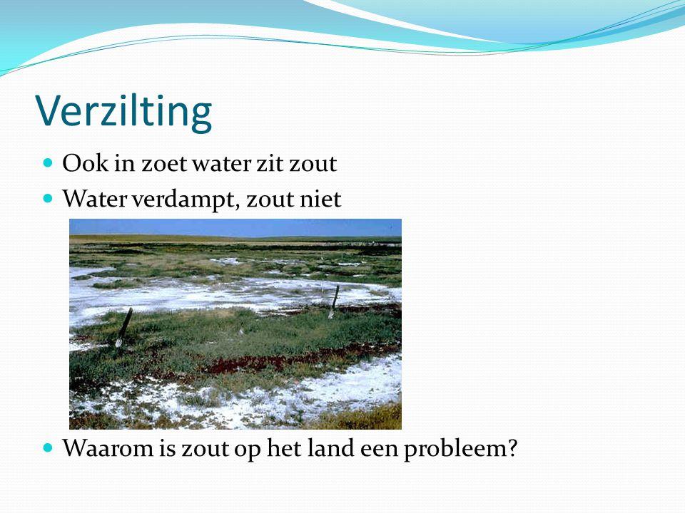 Verzilting Ook in zoet water zit zout Water verdampt, zout niet