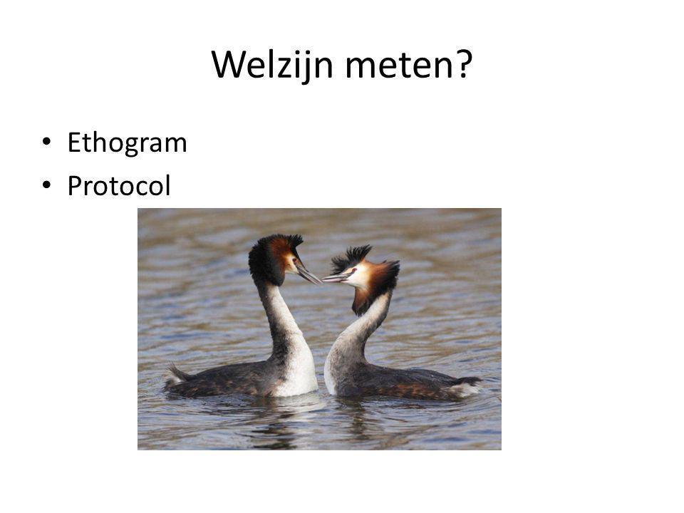 Welzijn meten Ethogram Protocol