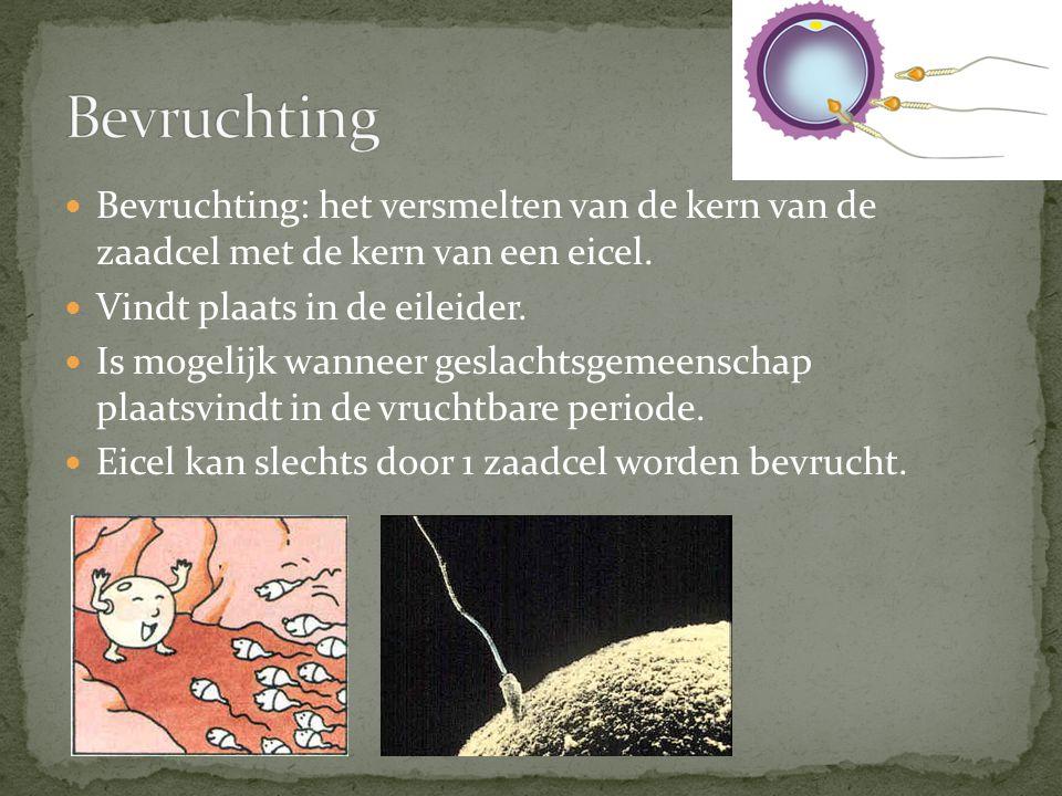 Bevruchting Bevruchting: het versmelten van de kern van de zaadcel met de kern van een eicel. Vindt plaats in de eileider.